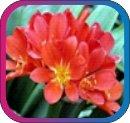продам семена экзотических растений - Страница 3 D4cf2a5fd2cd