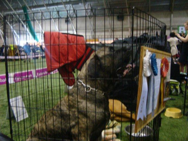 Собаки Татьяны Моисеенковой, кот Мензурка - Страница 3 Ff1be164451b