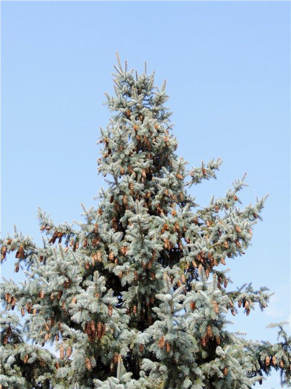 Фотографии цветов и деревьев C688ce4523e3