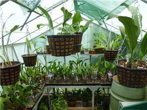 Размещение орхидей 42c423ecc640t