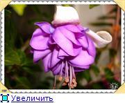 ФУКСИИ В ХАБАРОВСКЕ  - Страница 3 3135d0e9682dt