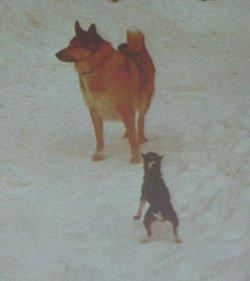 Диалог с собакой: сигналы примирения Dc192963f39c