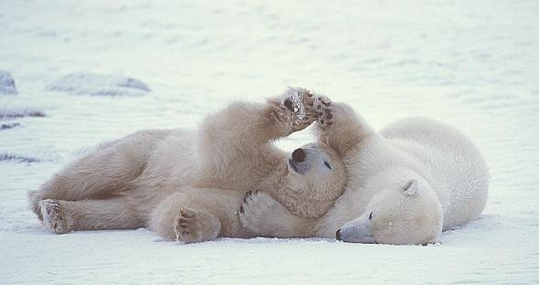 Ничто человеческое медведям не чуждо 3f097a1e83d0