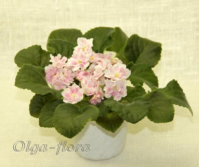 Розовый Жемчуг   (К. Л. Морев) Eccbfef413a0