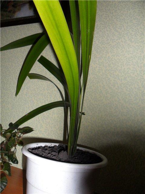 Как называется растение 150cba2ca4d3