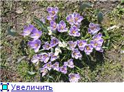 Весна идёт... E4920797978at