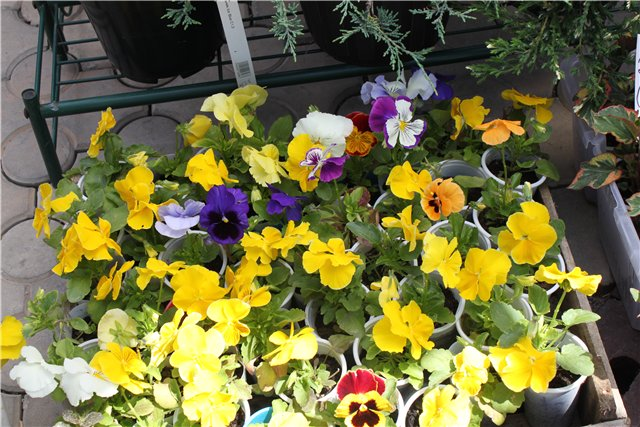Фестиваль цветов в Алматы - «Алматы – гул кала» Cfaeb46399f0