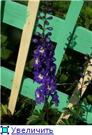 Лето в наших садах - Страница 4 B9916e8f7af1t