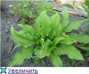 Лето в наших садах Cee9041f57a6t