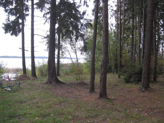 За грибами в Конаково (Тверская область, Волга)! Bfc4982b6602
