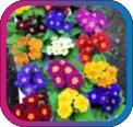 продам семена экзотических растений - Страница 3 Ec70b29bc795