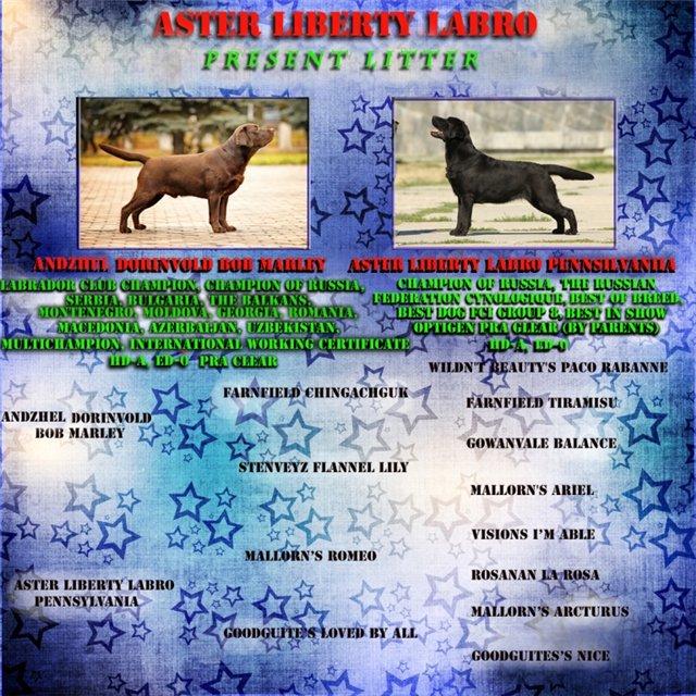 Щенки в питомнике Aster Liberti Labro!!! - Страница 12 Bb01db7d3626