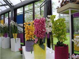 Рай тюльпанов или Кёкнхов - 2012 Ace6e35101a8t