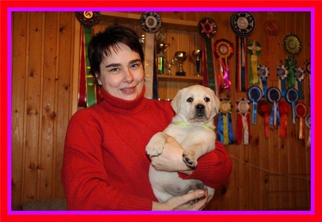 """Питомник """"Прима Персона"""". Мои собаки-моя жизнь! Fb63516fe71a"""