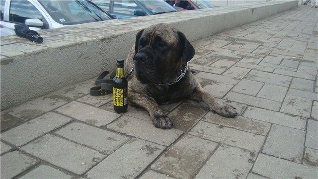 Наши собаки, друзья и гости, кот Мензурка - Страница 33 E4a45f0ba388