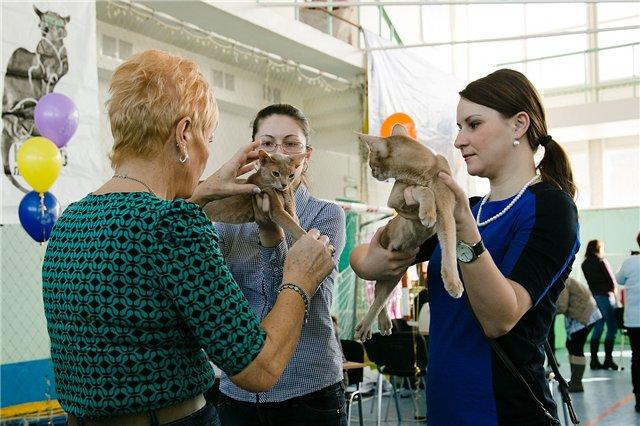 30 марта 2013 года Международная выставка в Южно-Сахалинске B59582a253c2