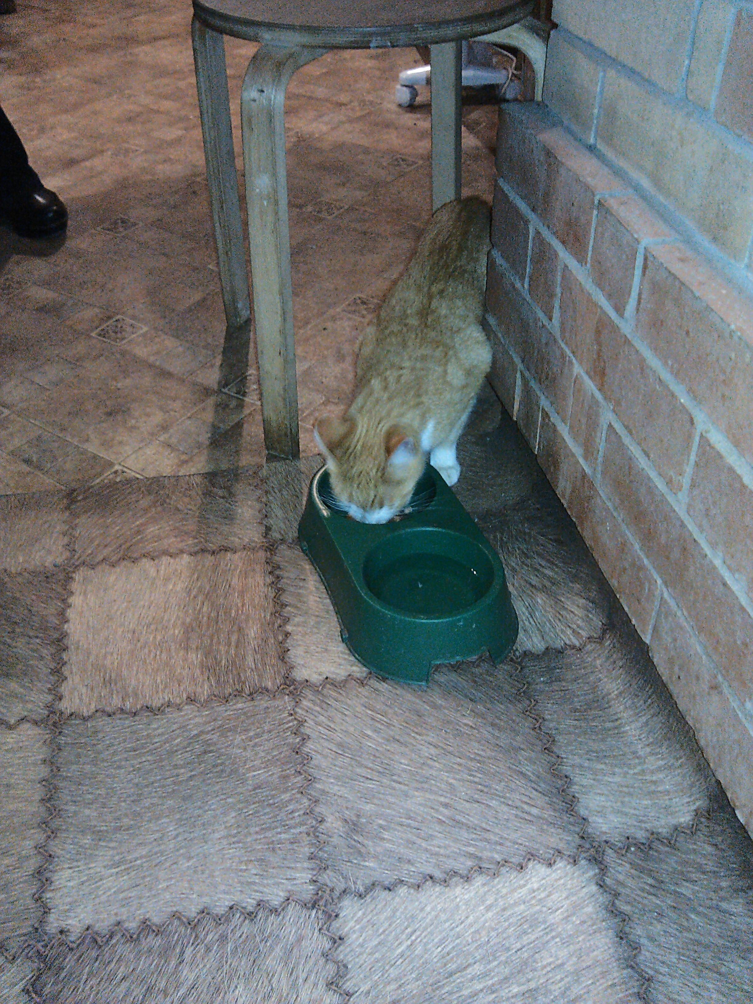 Кот на сосне, Токсово (вызов 599) Aa94557ae80f