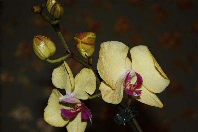 Растения от FILIGERa - Страница 3 21f9f2052ea7