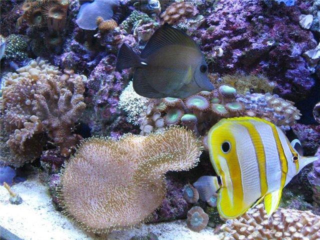 Фотографии аквариума 135807538e8c