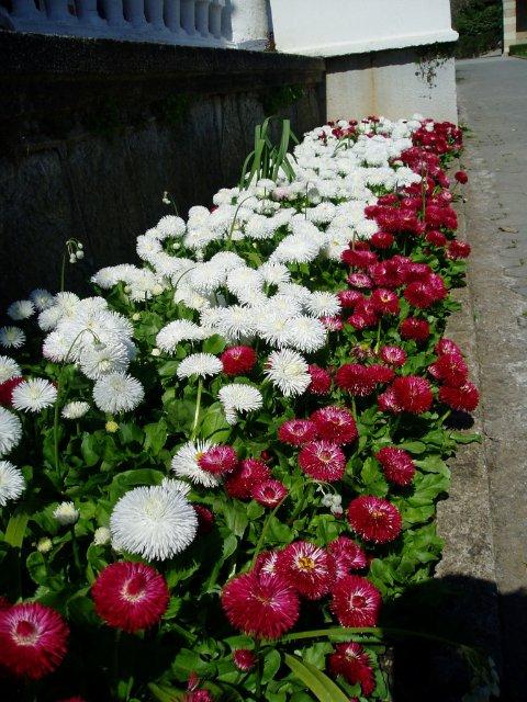 Крым. Никитский ботанический сад. Bc9ff07639d4