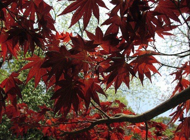 Японская культура и традиции. - Страница 3 Be53a304d061