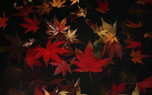 Японская культура и традиции. - Страница 3 B5953e24f6d4