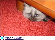 Хочу похвалиться котятами - Страница 3 D95345b87e9at
