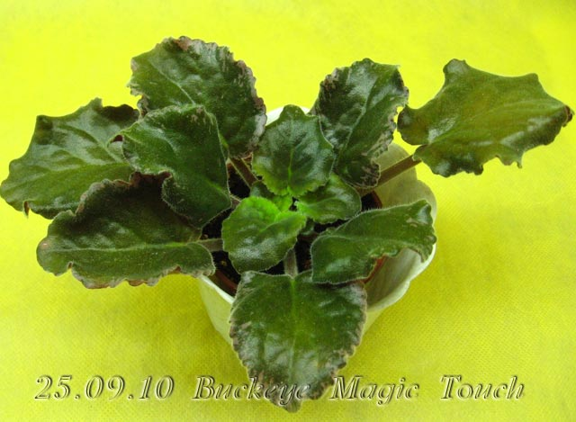 Цветение к Н. Г. (Olga-flora) C1d7b5ea21a2