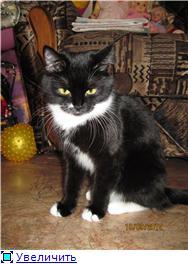 Хочу похвалиться котятами - Страница 3 899d41e5e165t