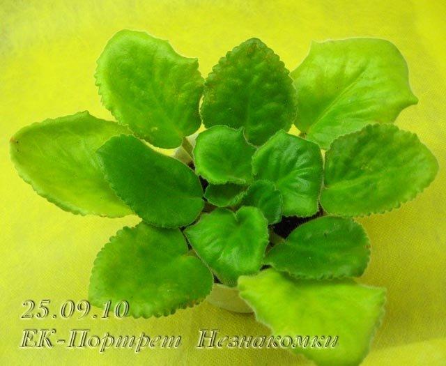 Цветение к Н. Г. (Olga-flora) 8f0897dfb5f4