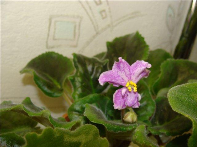 Весеннее  цветение (Хваст от Веры) - Страница 7 81962e45b5a7