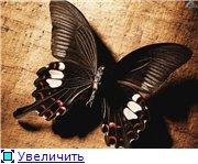 Животные, птицы и насекомые Ea4e531ae280t