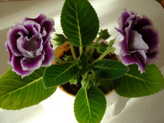 Мои цветочки - Страница 13 2494350f185d