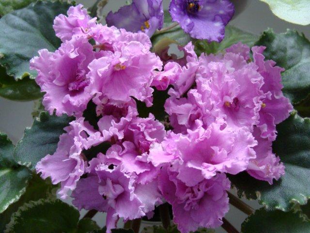 Мои цветочки - Страница 21 E3000c489268