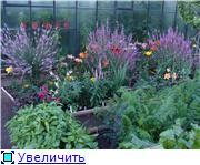 Лето в наших садах - Страница 6 4cd2817de7b6t