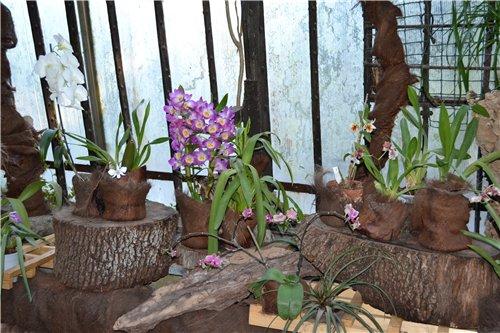 Выставка орхидей Никитского ботанического сада 4aed80456ba5