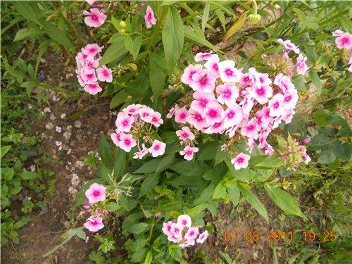 Дачные красоты - Страница 6 9dbc02b629df