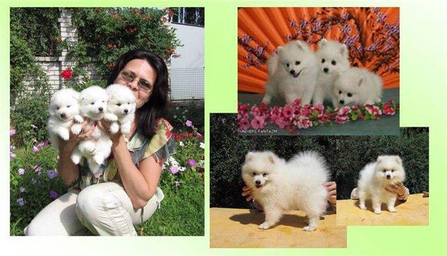 Владельцы собак - продажа собак 9c91531ca043