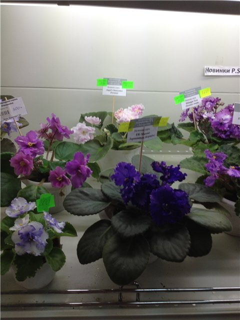 Выставка цветов 7a8621879c46