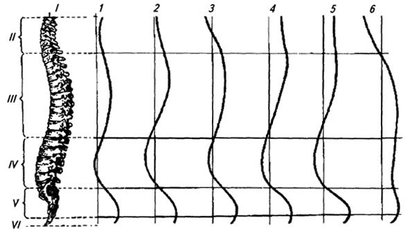 Теория музыки и позвоночник - Страница 4 B520b6566969