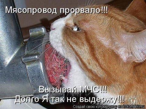 Звери в теме;) - Страница 2 0103f976c4b6