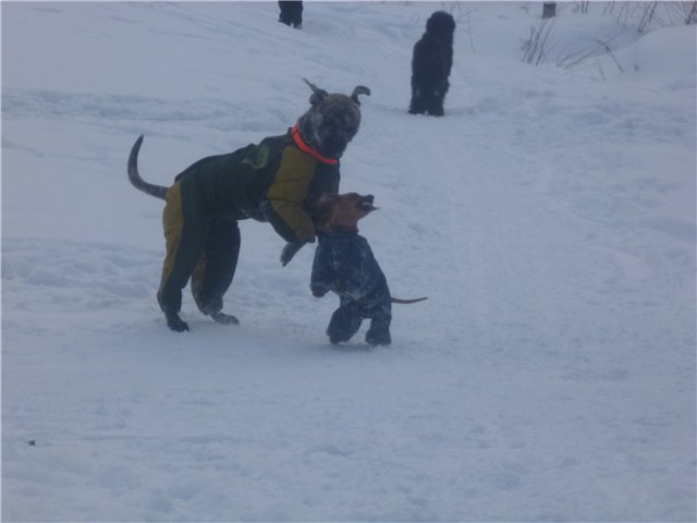 Обязательный минимум для содержания собаки (амуниция) Db047e175773