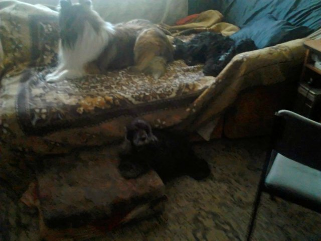 Наши собаки, друзья и гости, кот Мензурка - Страница 30 0c151f89a521