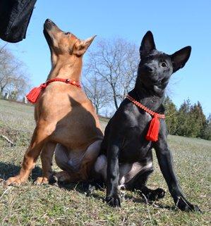 MAGIC CHARM - обереги, ошейники, украшения, ринговки и другие аксессуары для  собак и кошек. 705a96077f25