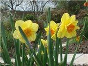 Весна идёт... - Страница 2 854810104f35t