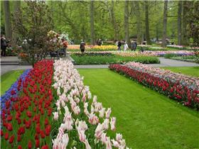 Рай тюльпанов или Кёкнхов - 2012 F5da0c848455t