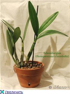 Горшки для орхидей D4a61c564a35t