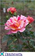 Розы 2011 1efd3b0dd3eet