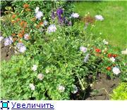 Лето в наших садах - Страница 6 5fcdc3c487a2t
