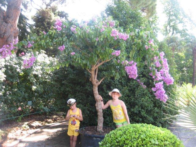 Никитский ботанический сад. 85e01e49568c